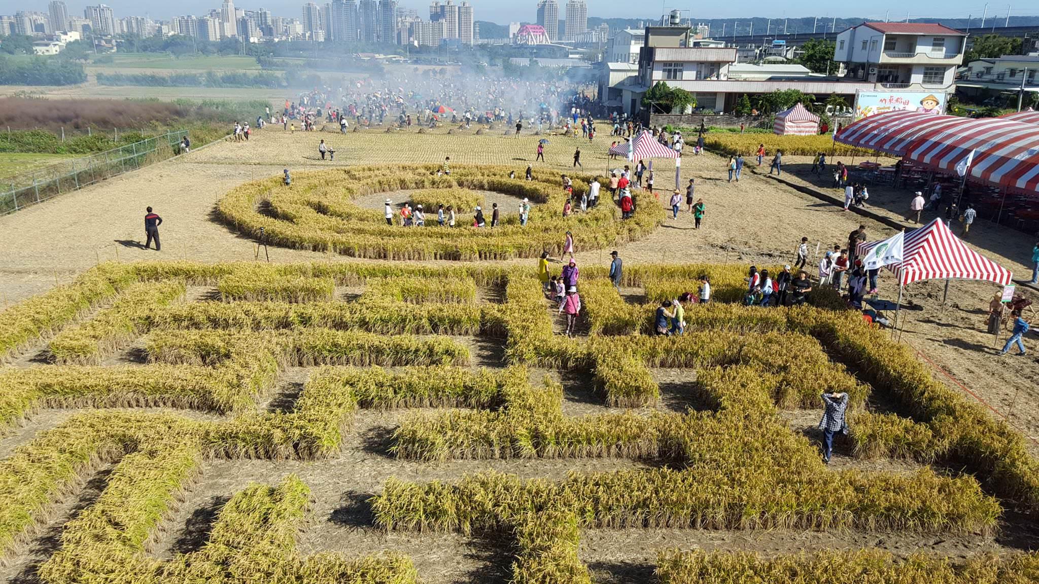 竹東地區出現巨型稻田迷宮?2017竹東稻田嘉年華即將開始!