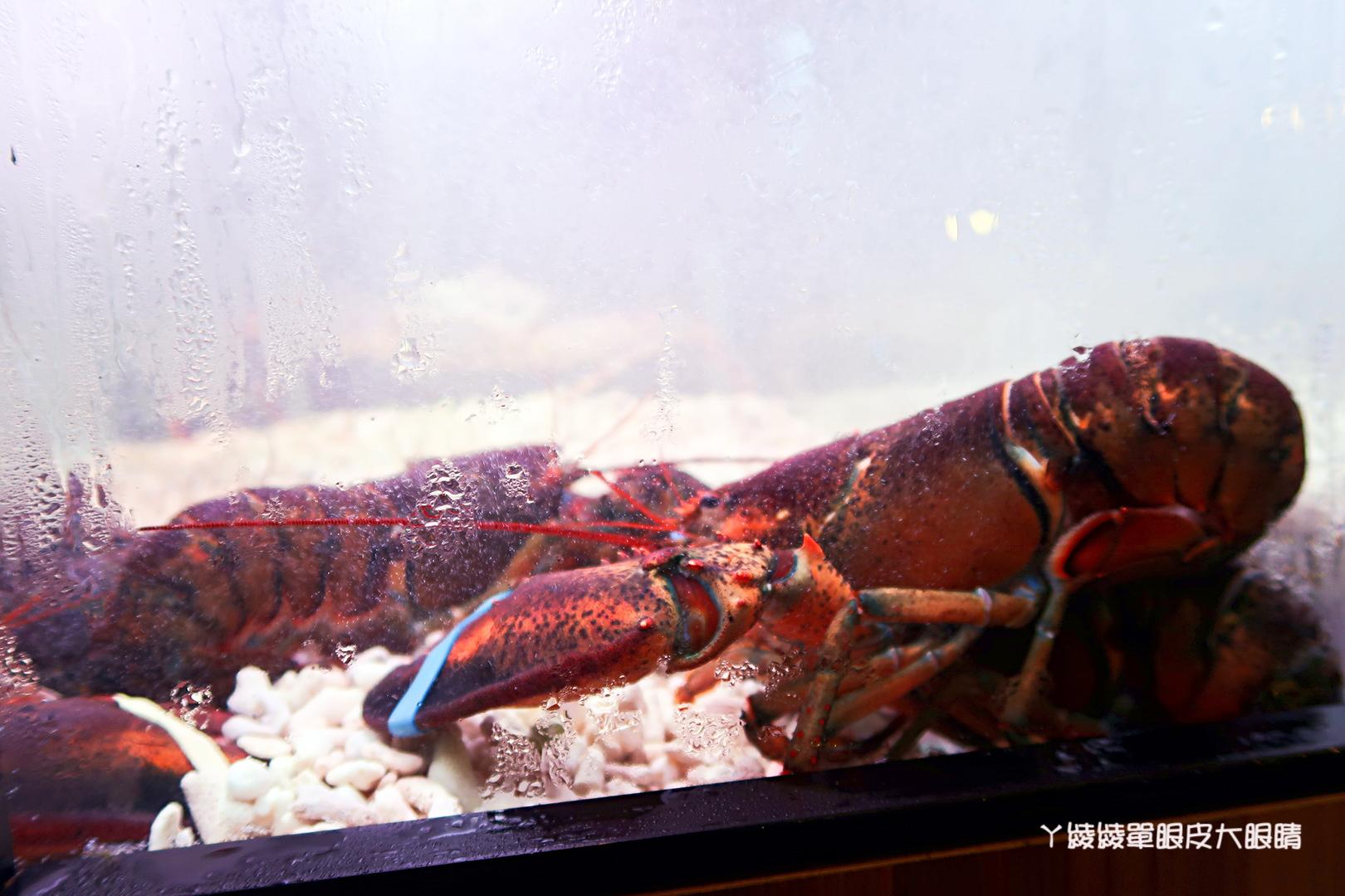 新竹火鍋推薦極鼎鮮鍋物!活跳跳的波士頓龍蝦自己撈,大肉盤吃到不要不要,巨城附近東大路新開幕火鍋