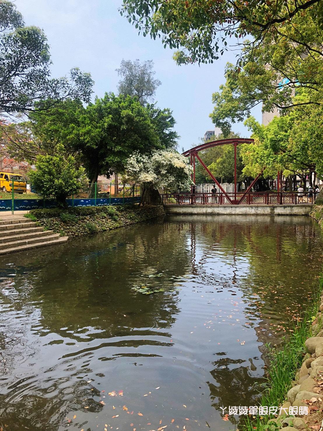 新竹下起四月雪,護城河畔的小橋、流水與流蘇花形成一幅美畫