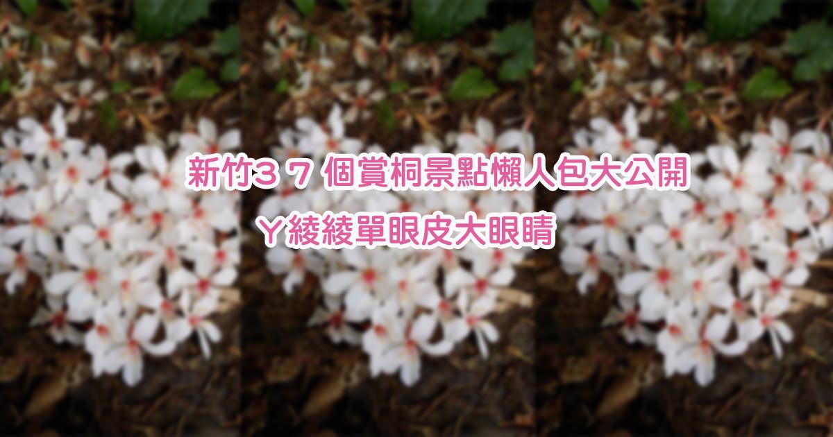 新竹賞桐花景點!懶人包資訊整理,三十七個油桐花地點大公開