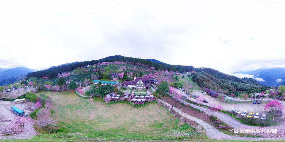 新竹賞櫻景點推薦山上人家!櫻花季來了!徜徉在大自然中喝咖啡賞櫻