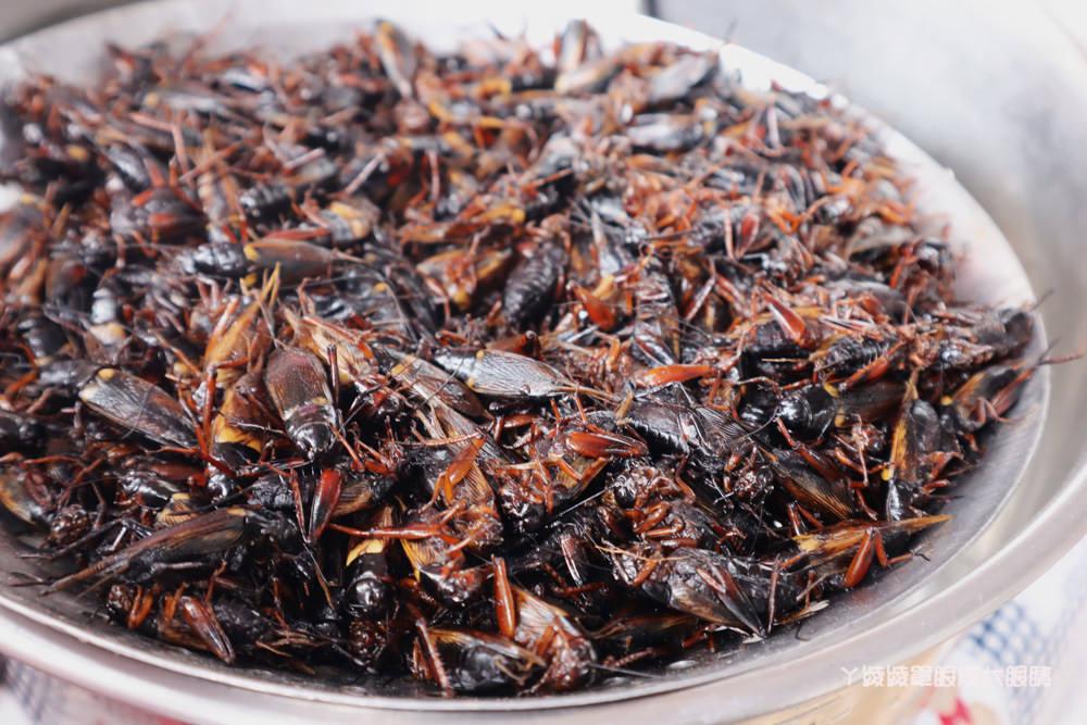 新竹假日花市美食!蟲蟲大餐終極版來了,酥酥脆脆的炸蟋蟀你敢吃嗎?