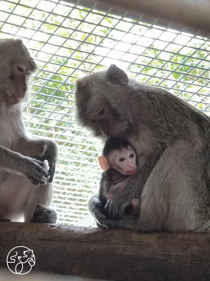新竹市立動物園預計八月局部試營運,年底將全園開放