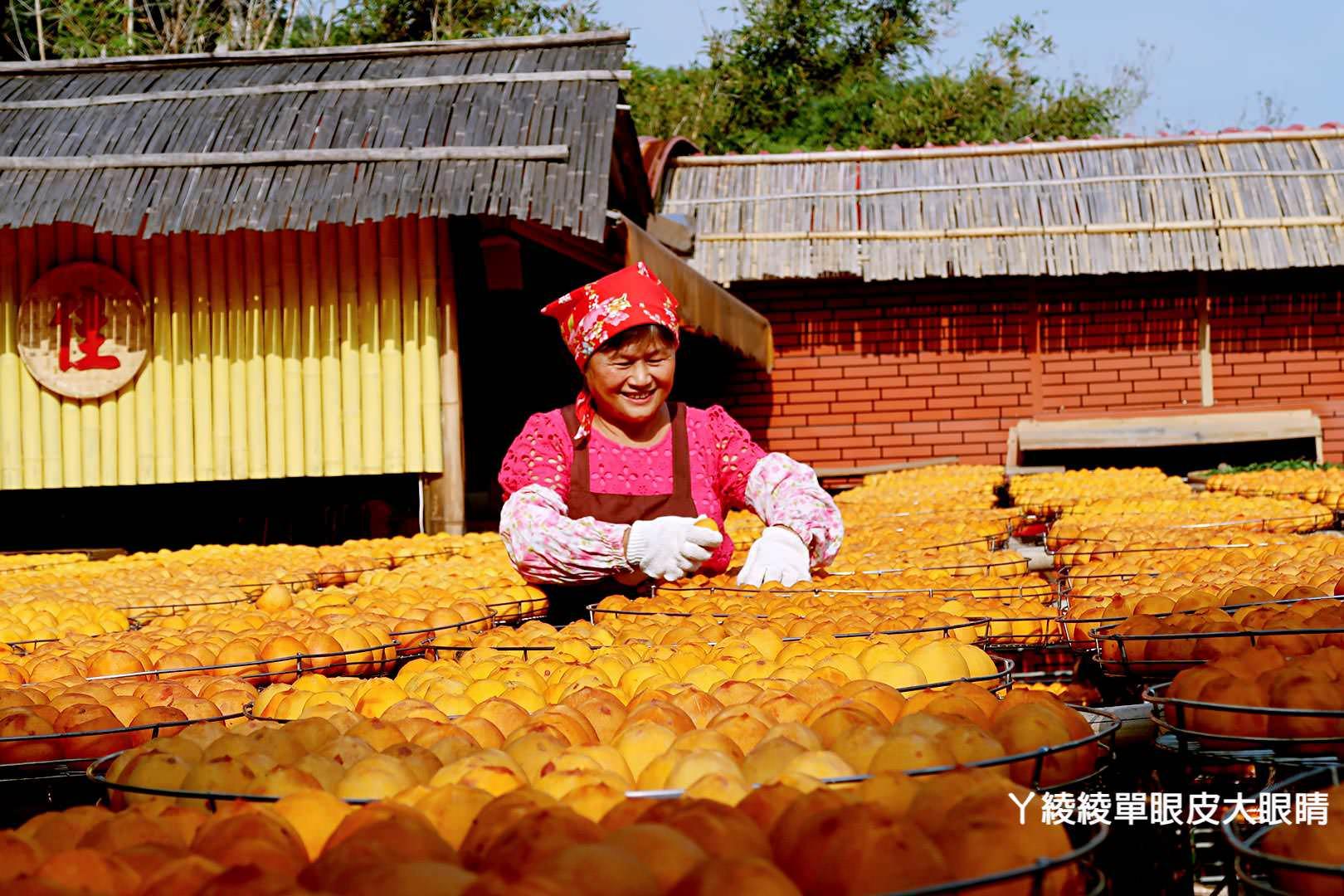 新竹旅遊景點推薦!新埔味衛佳柿餅觀光農場,一起來捏柿餅、玩柿染!