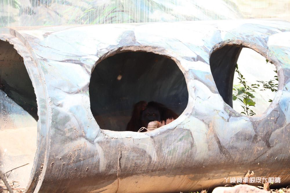 新竹市立動物園正式開園!新竹動物園開放時間、園區導覽、入園門票、停車接駁車交通資訊懶人包
