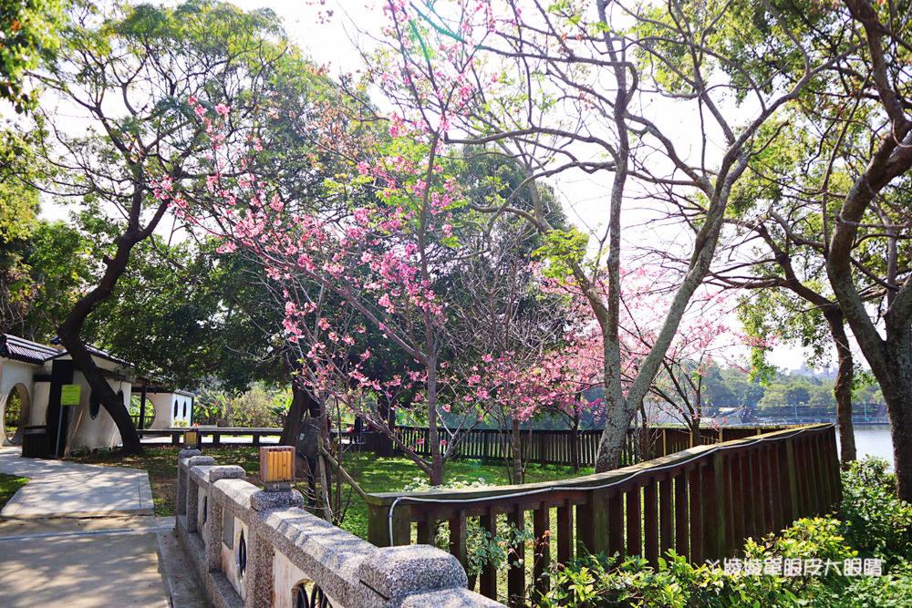 新竹賞櫻景點|青草湖櫻花開了!不輸江南風情的賞櫻秘境在于飛島,宛若小西湖美景