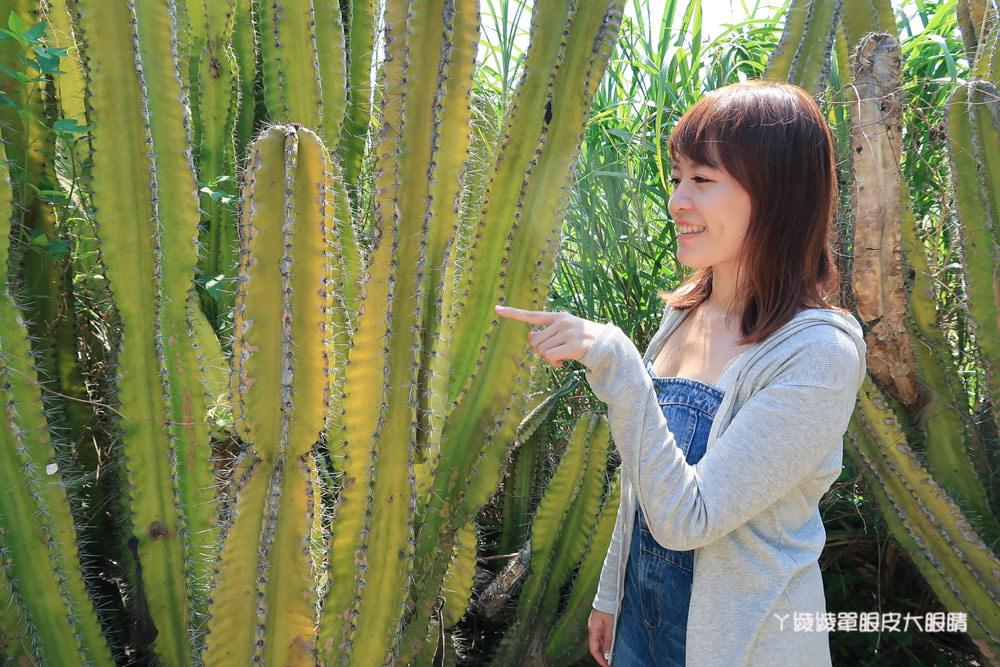 新竹免費旅遊景點推薦 新竹多肉植物王國在福祥仙人掌園!IG拍照爆紅打卡景點