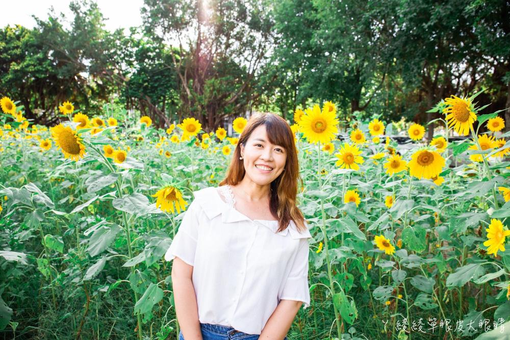 新竹免費旅遊景點!竹北新瓦屋比人還要高的金黃色向日葵花海熱情綻放中!生態池荷花即將盛開