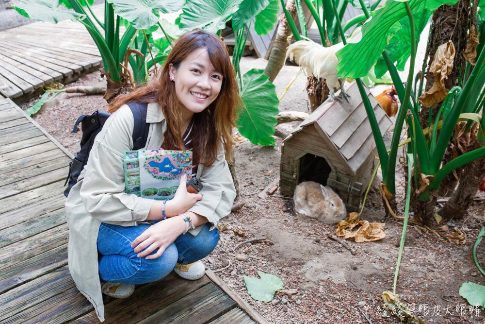 超萌樹懶、天竺鼠車車陪你踏青!新竹綠世界生態農場玩透透,來找可愛羊駝放放電