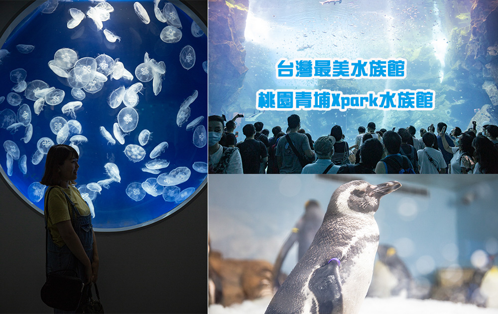 北台灣最大水族館推薦!桃園青埔Xpark水族館門票、交通整理!八公尺高的大水缸超壯觀,必看可愛企鵝隧道、療癒水母