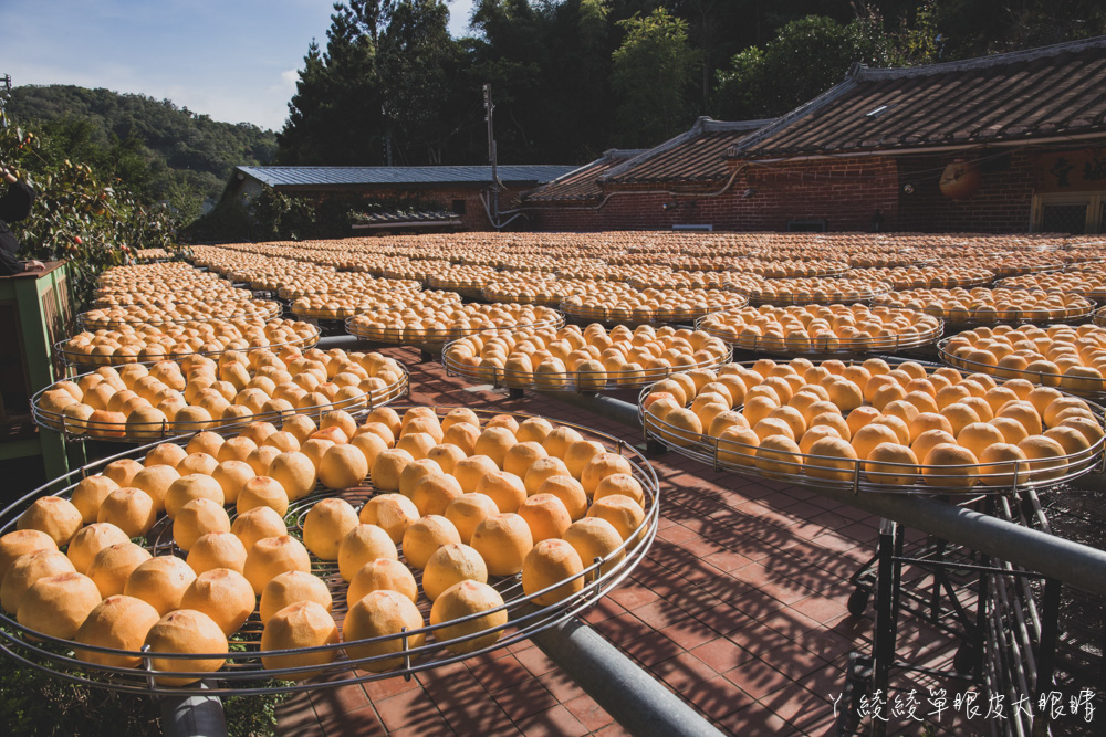 新埔味衛佳柿餅觀光農場!乘著九降風欣賞黃澄澄的柿子,免費參觀新竹超人氣柿餅拍照打卡聖地