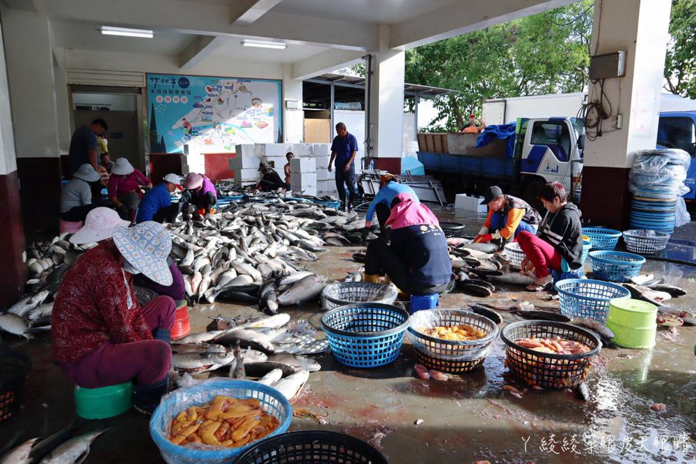 2020新竹縣烏魚節DIY活動開跑!竹北拔仔窟烏魚子乏人問津,新竹人一起來挺七十歲高齡的養殖戶