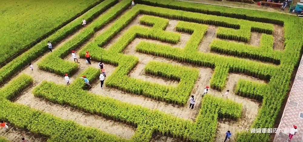 2020竹東地瓜節焢窯強勢回歸!竹東地區出現巨型稻田迷宮,連兩天放假一起來體驗農村活動
