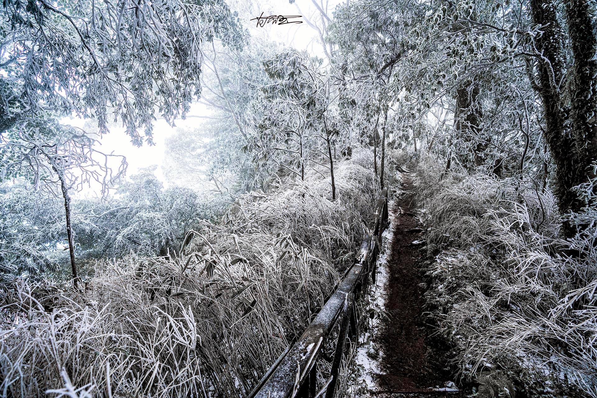 新竹尖石魯壁步道雪景好美!目前雪已融化,沒有下雪了!綠意盎然的山頭依舊