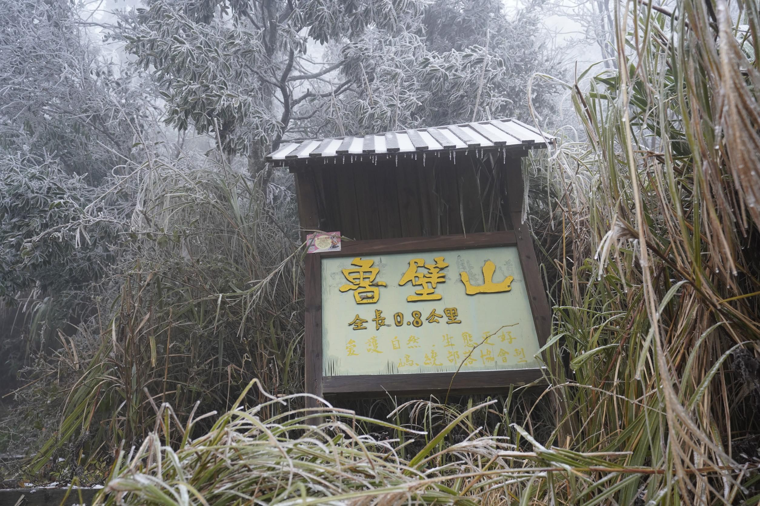 新竹尖石魯壁步道又下雪!放眼望去白皚皚的雪地超美,把握時機賞雪