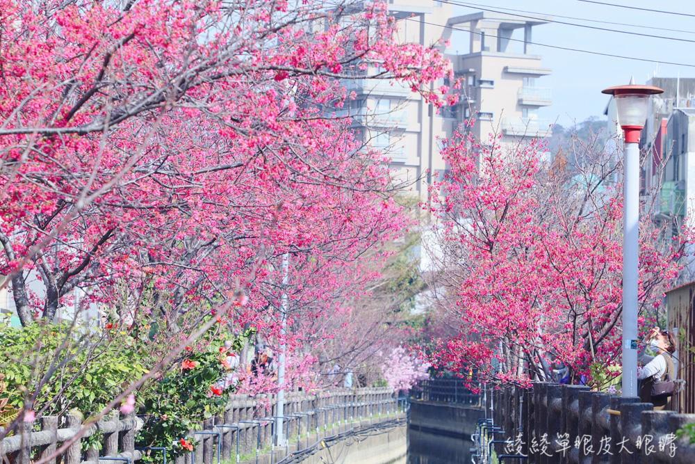 新竹私藏賞櫻景點!新竹仙炸的櫻花景點,粉嫩花朵與水面形成絕美呼應!彷若來到日本