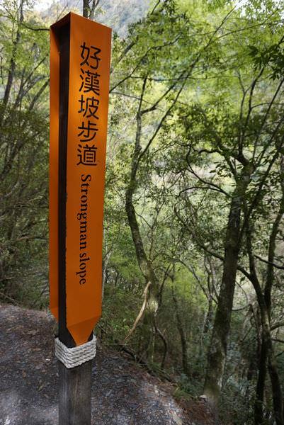 ▌南投仁愛‧旅遊景點 ▌萬大發電廠.奧萬大國家森林遊樂區賞櫻!!